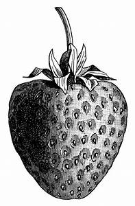 Vintage Strawberry Clip Art  Black And White Graphics