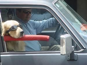 Was Müssen Sie Hier Beachten : checkliste hund im auto was sie beachten m ssen hundehaltung ~ Orissabook.com Haus und Dekorationen