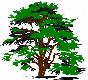 Tree Vector Png - ClipArt Best