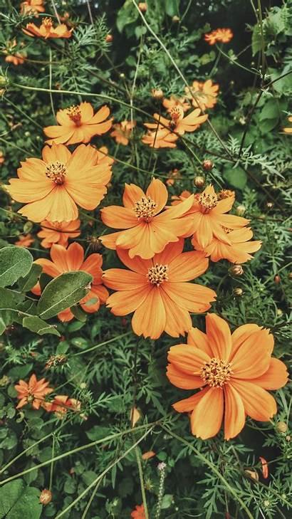 Flower Unsplash Orange Flowers Hirve Harshal Bloom