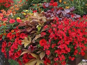 Balkon Ideen Pflanzen : rote blumenfreude f r balkon und terrasse ~ Lizthompson.info Haus und Dekorationen