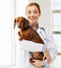 hunde op versicherung vergleich  xxl