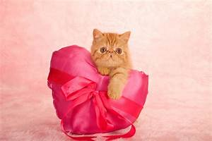 6 Valentine's Day Conversation Hearts from the Cat - Catster