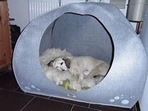 Hunde Sachen Kaufen : hundeh hle basteln kunst ideen pinterest ~ Watch28wear.com Haus und Dekorationen