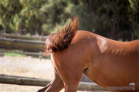 pferdebiestern vorbeugen die  besten hausmittel