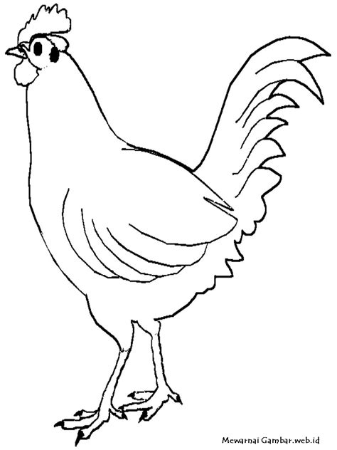 Mewarnai Gambar Ayam Mewarnai Gambar