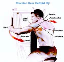 Pec Deck Fly Muscles Worked by My Saturday 1 5 Hour Visit Happy And Healthy Kate