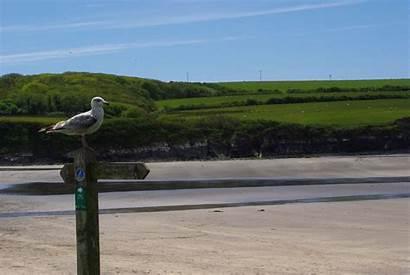Newport Pembrokeshire Camping Campsites Wales