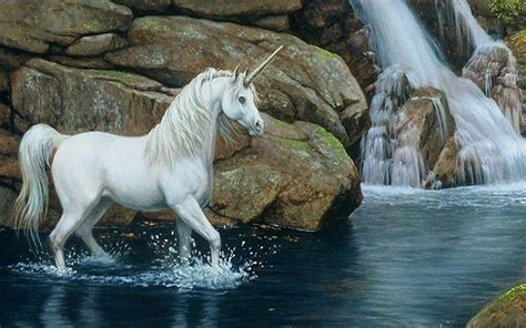 Beautiful Horses Wallpapers