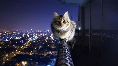 Cat Wallpaper Hd Hd