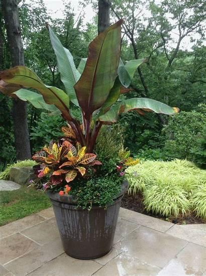 Tropical Container Planters Garden Pots Backyard Gardens