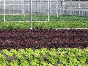 Feldsalat Setzlinge Pflanzen : kleine fr hlingsf hrung 2012 demeter g rtnerei sannmann ~ Frokenaadalensverden.com Haus und Dekorationen