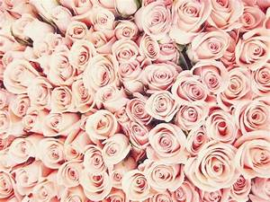 pink, rose, wallpaper, sfondo - image #3516945 by marine21 ...