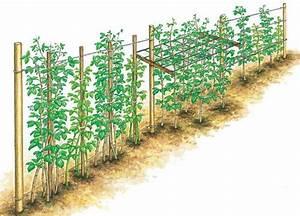 Tomaten Richtig Schneiden : himbeeren richtig schneiden himbeeren g rten und pflanzen ~ Lizthompson.info Haus und Dekorationen
