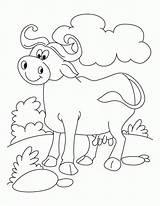 Coloring Buffalo Popular sketch template