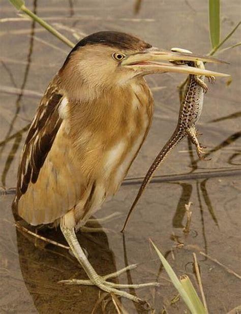 what really eat birds 23 pics izismile com