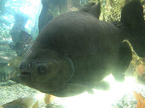 l aquarium du perigord noir l aquarium du p 233 rigord noir dordogne p 233 rigord noir