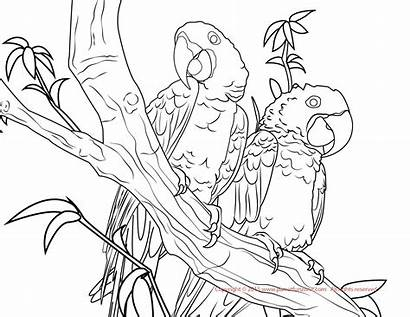 Macaw Coloring Pages Hyacinth Parrot Conure Sun