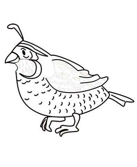 Coloring Quail by Quail Image Coloring Page Color