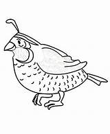 Quail Coloring Pages Preschool Printable Animals Worksheets Animal 733px 59kb Colorluna sketch template