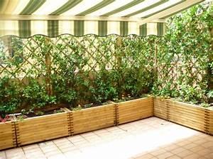 Plantes Grimpantes Pot Pour Terrasse : brise vent pour balcon et terrasse quel type choisir ~ Premium-room.com Idées de Décoration