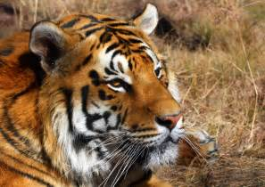 Extinct and Endangered Animals