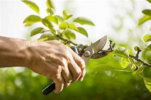 Tree Pruning Day – Saturday, September 13th | ReGreen ...