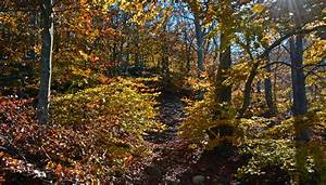 Forests, Autumn, Trees, Foliage, Nature, Wallpapers, Hd