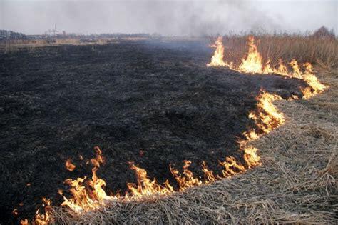 Lielākais kūlas ugunsgrēks - 20 hektāri