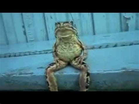 real kermit  frog sitting    human person