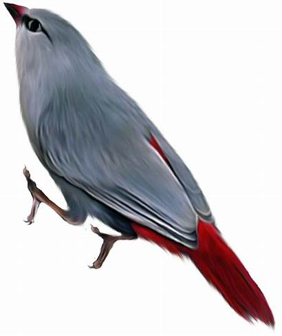 Burung Lukisan Gambar صور للتصميم مفرغه طيور