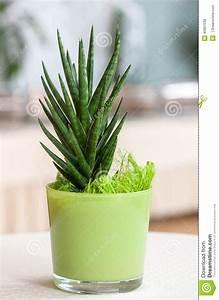 Plante D Intérieur : petite plante d 39 int rieur dans un pot de fleur vert clair ~ Dode.kayakingforconservation.com Idées de Décoration