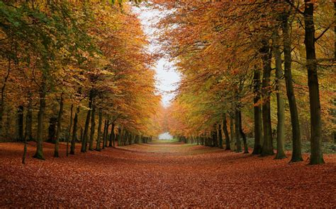 fall computer backgrounds fall live wallpaper for desktop wallpapersafari