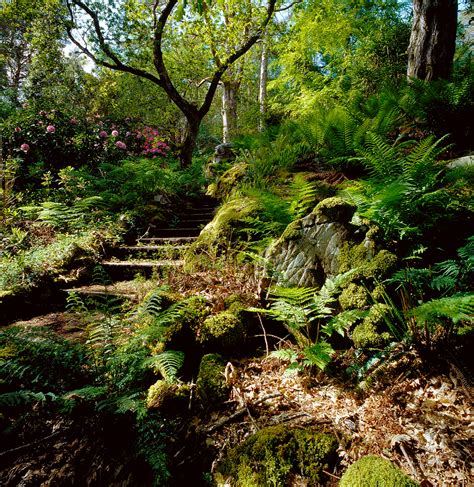 woodland gardening lochalsh woodland garden