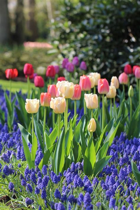 Bulb Garden by 6 Tips For Planning A Beautiful Bulb Garden