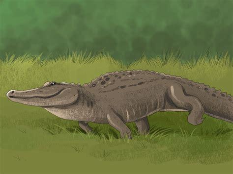what color are crocodiles crocodile american alligator pencil and in color