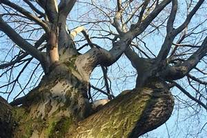 Bäume Schneiden Wann : b ume obstb ume apfelbaum schneiden wann wie ~ Lizthompson.info Haus und Dekorationen