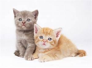 cat, cats, cute, pet, pets - image #308692 on Favim.com