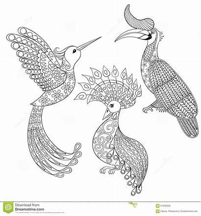 Coloring Bird Adult Hummingbird Zentangle Exotic Books