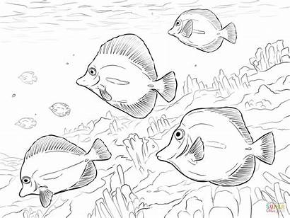 Coloring Yellow Pages Tangs Drawing Tang Fish