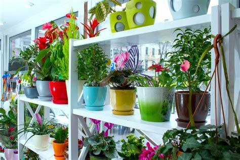 tanaman hias  hobi hingga terapi