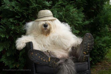 wallpaper fur boots jungle dogs snout dog