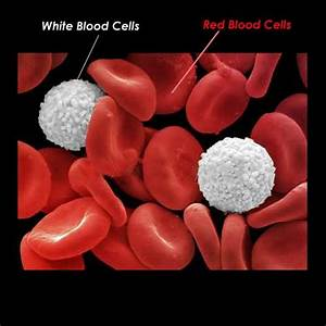 Function of White Blood Cells – What are WBC | Health Zen ...