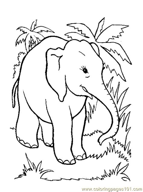 bird coloring page   coloring page  elephant coloring pages coloringpagescom