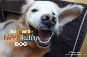 say no to dental disease brush your dogs teeth