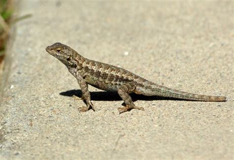 What To Feed A Wild Lizard