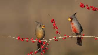 Birds Writtenmyway