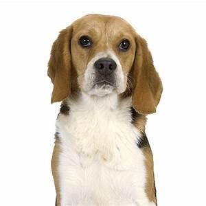 Video Pour Chien : alimentation pour chien bien nourrir mon chien adulte royal canin ~ Medecine-chirurgie-esthetiques.com Avis de Voitures