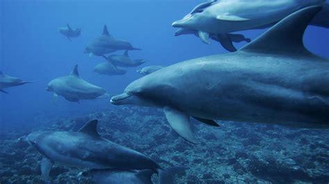 delfines en el oceano  fondos de pantalla