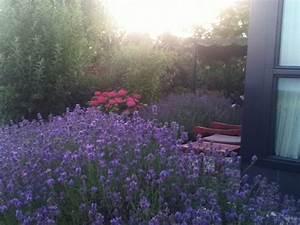 Echter Lavendel Kaufen : echter lavendel lavandula angustifolia pflanzen kaufen online ~ Eleganceandgraceweddings.com Haus und Dekorationen